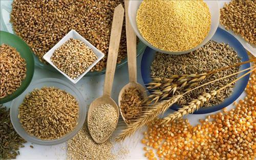 穀物は「非」必須栄養素で必要な...